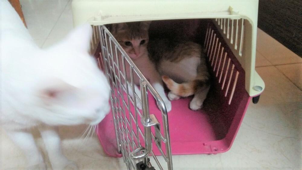 cat Garu, bitcoin cat, pet cat