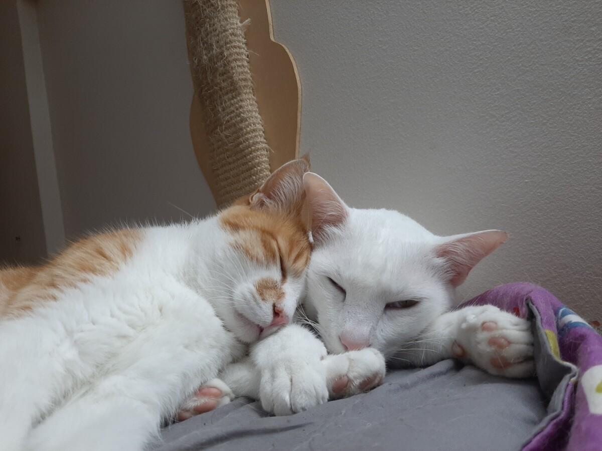 pet, cat, caturday, photography, life