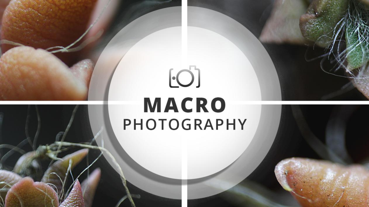 Session #1 Macro Photography | Rhino little tongues :P