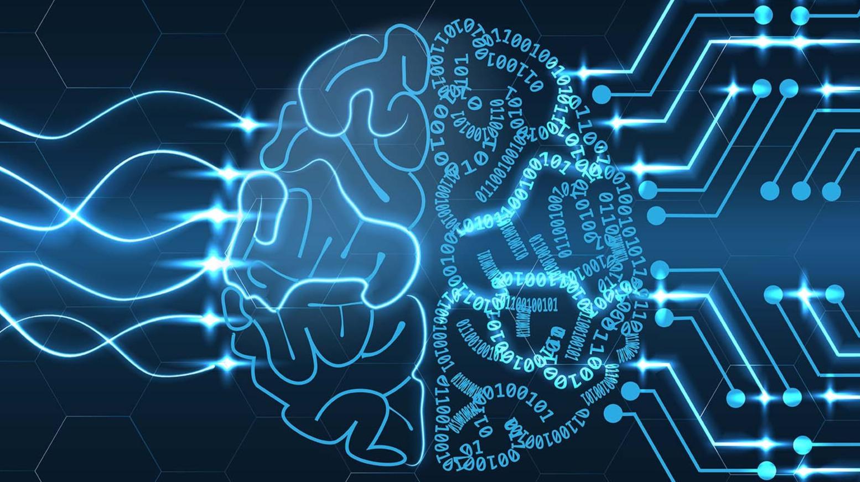 Brain Circuit
