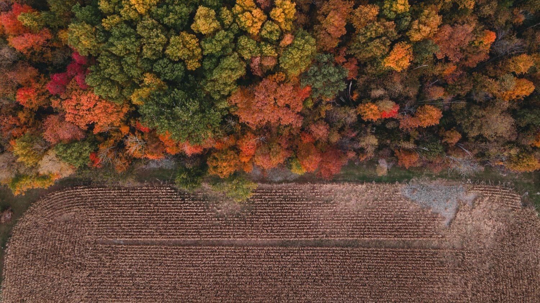 farm right before harvest
