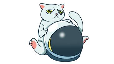 Random ass CAT token