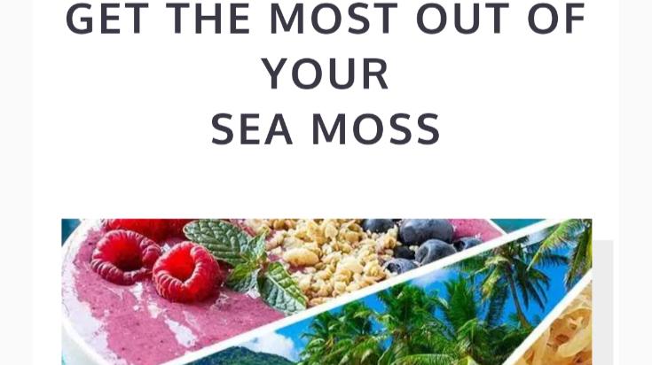 sea moss website