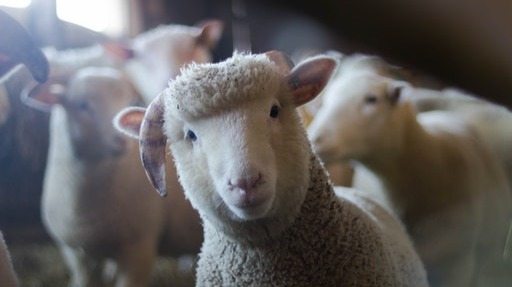 Is the Fed Nuking Crypto to Keep the US Sheep in Line?