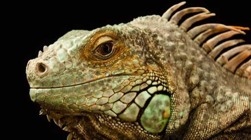 Do the reptiles control crypto?