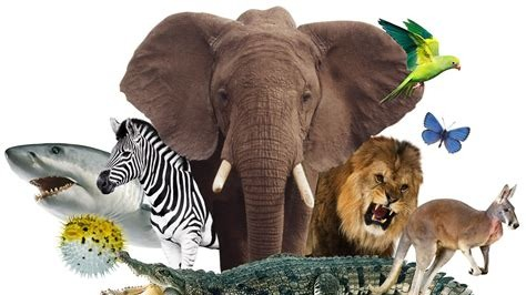 The Animal Kingdom of Crypto - Which one are you?