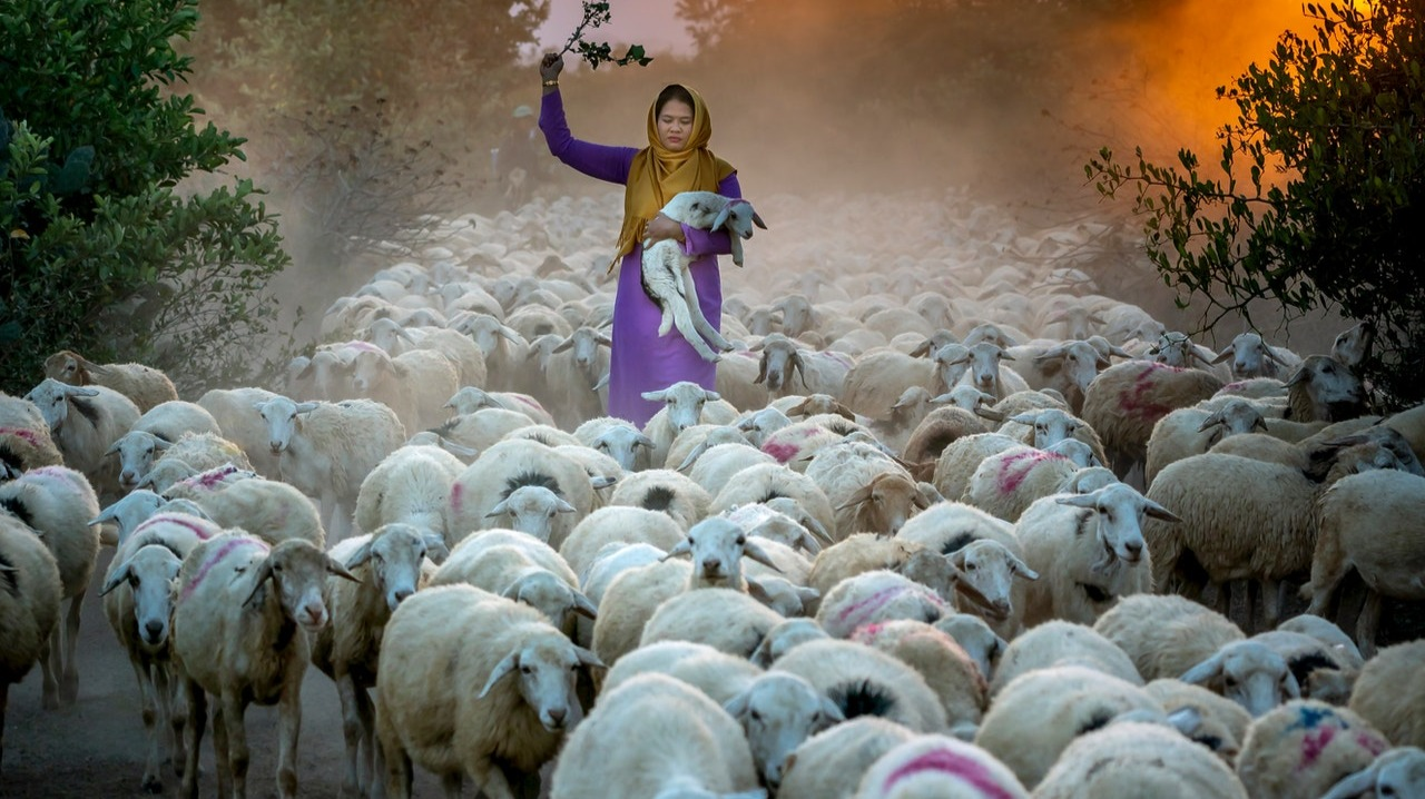 Herd behavior in Bitcoin ...