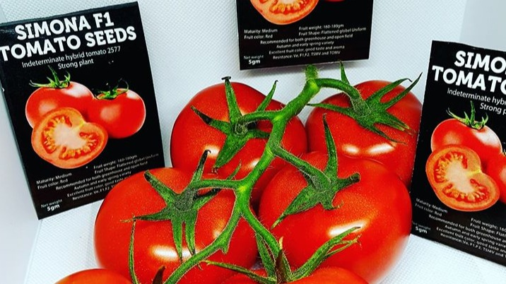 SIMONA F1 TOMATO VARIETY, Why any commercial tomato farmer should adopt it. (Part one)