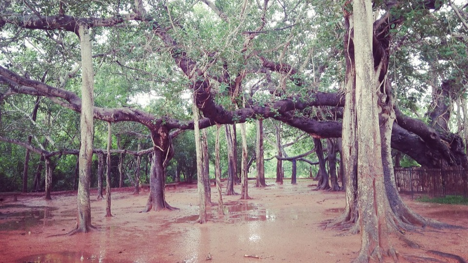 Lush Green Freshness comes alive on a rainy day at Auroville