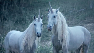 Two_unicorns