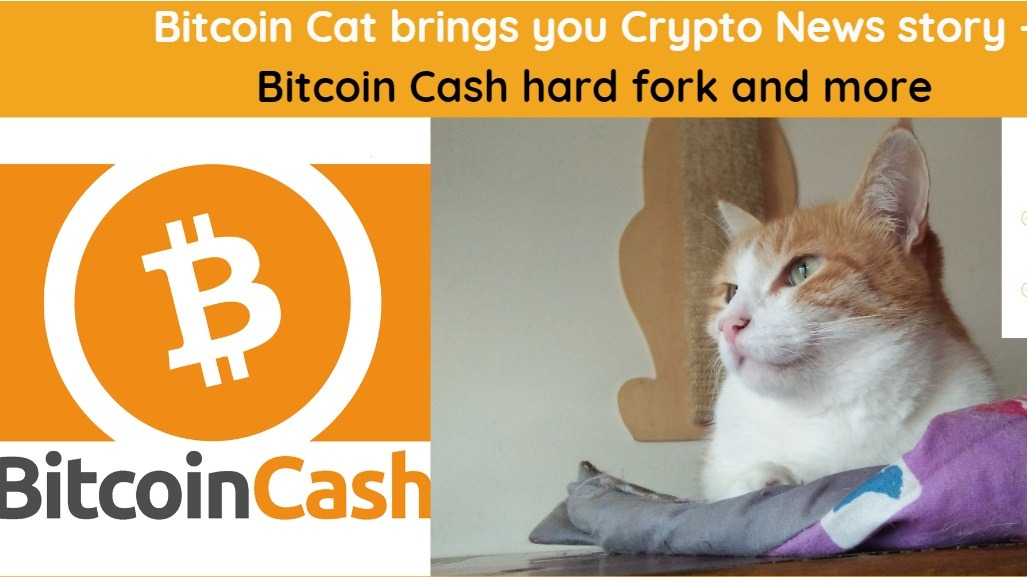 Bitcoin Cat brings you Crypto News story - Bitcoin cash hard fork, Bitcoin and Altcoin Dominance and more