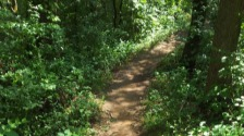running trail in woods