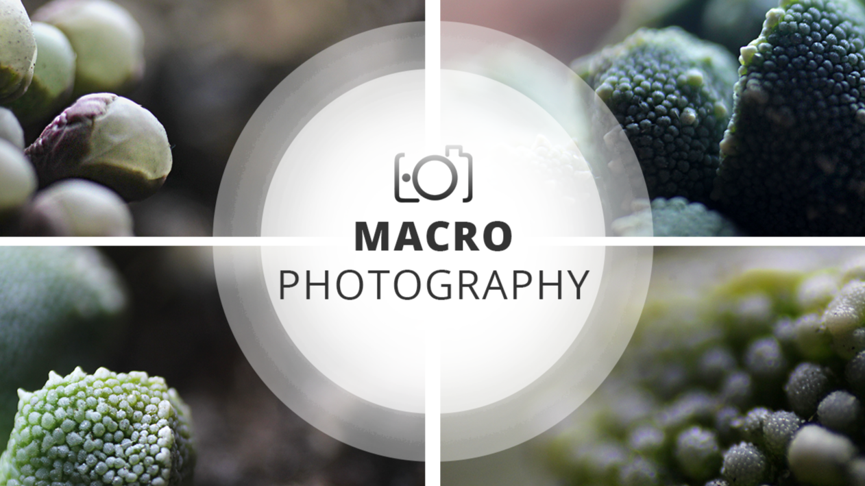 Macro Photography Session | Small ecosystems