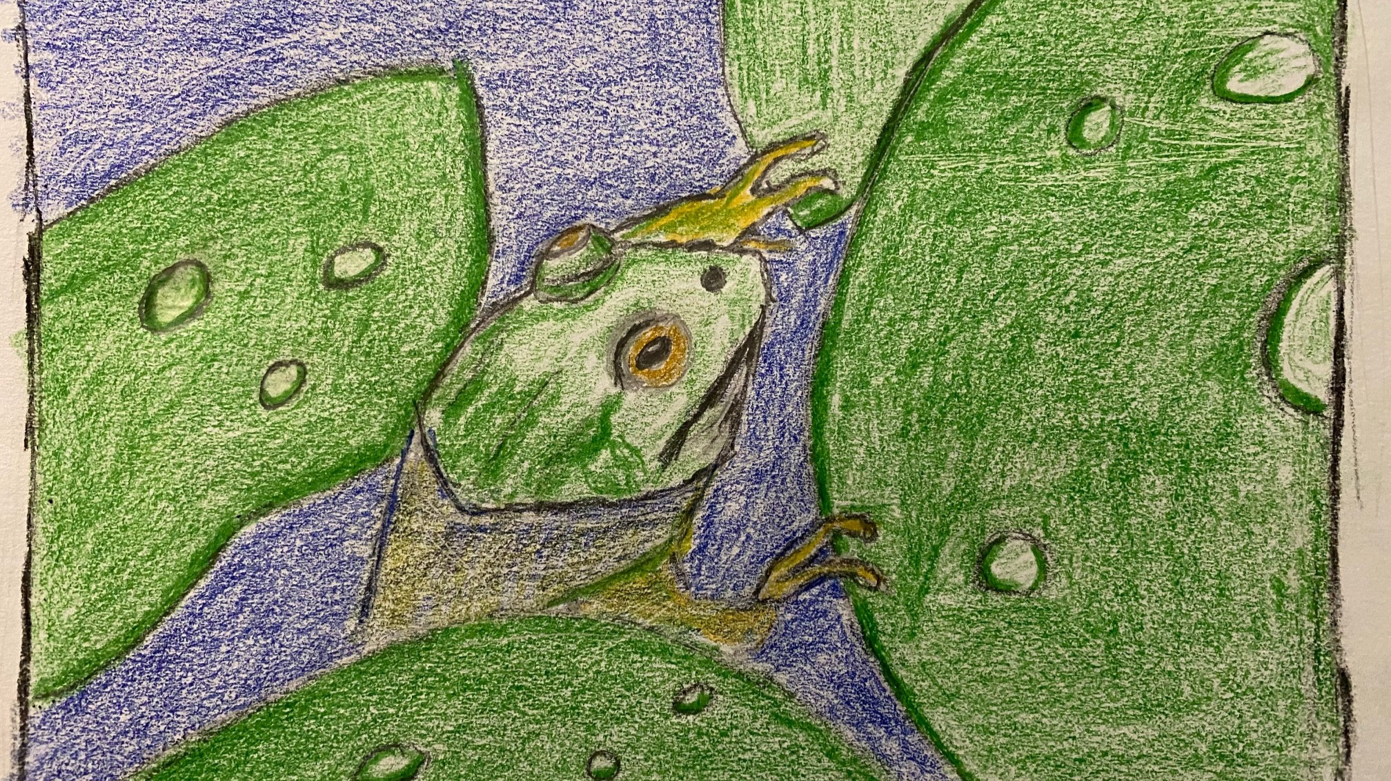 Frog and lily pads - colored pencil drawing